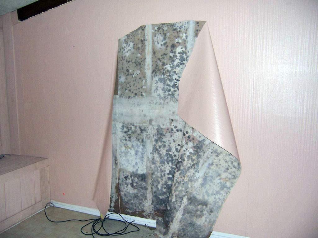 Как убрать плесень со стен перед поклейкой обоев